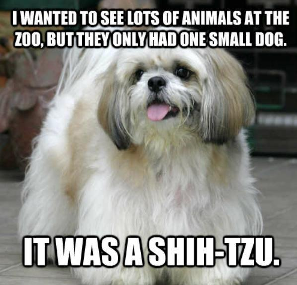 Amazing/Awful Dog Jokes: 24 Quips to Celebrate National Joke Day